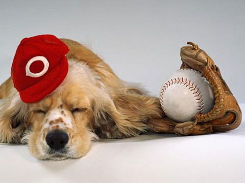 Hund in baseball cap with mitt and baseball